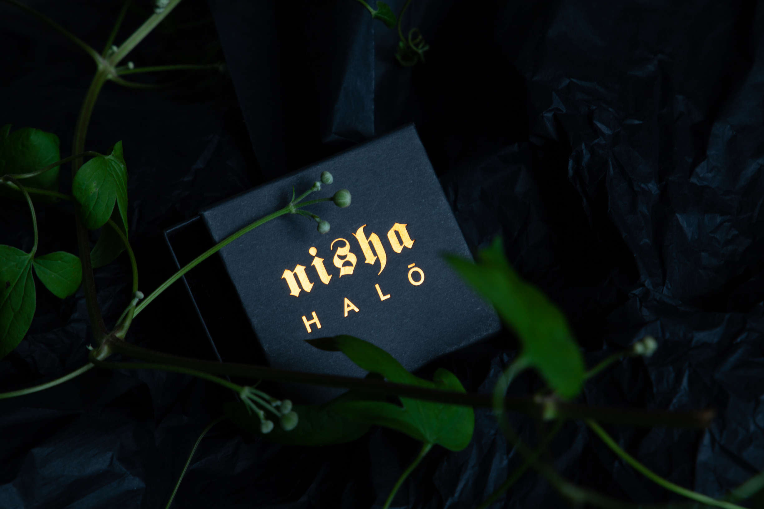 Nisha Halo Anna Cleary 4